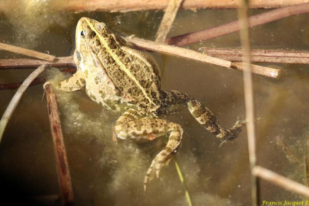 [Fil ouvert à tous] Reptiles, serpents, tortues, amphibiens, ... - Page 10 Img_9123