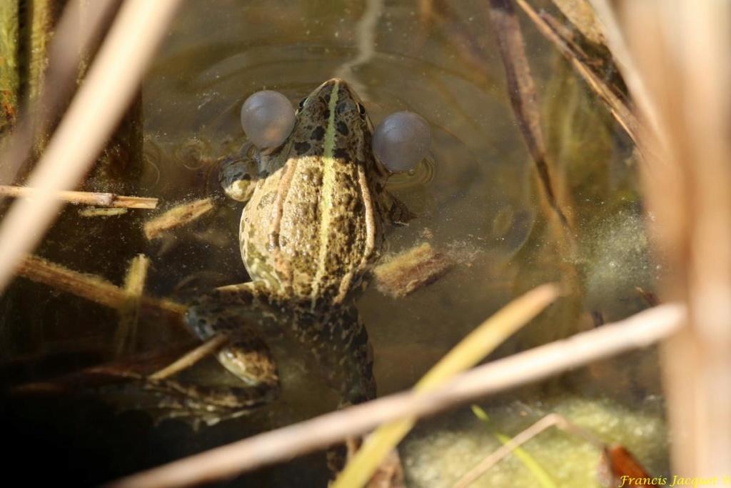 [Fil ouvert à tous] Reptiles, serpents, tortues, amphibiens, ... - Page 10 Img_9124