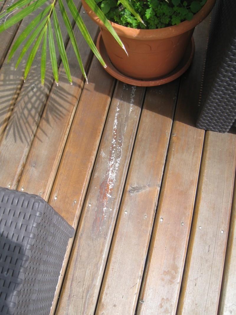 Terrasse en pin, passée au saturateur, et remontées de sève Img_3218