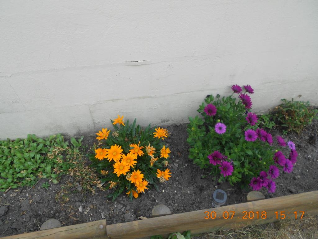 mon petit jardin  Dscn0168