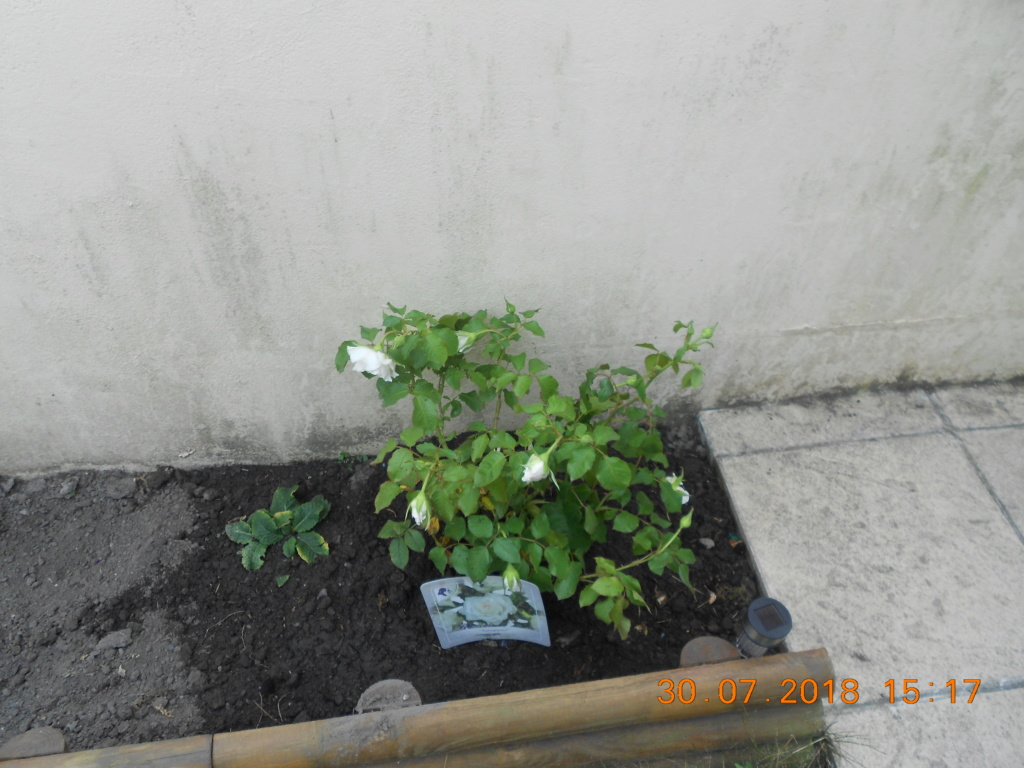 mon petit jardin  Dscn0170