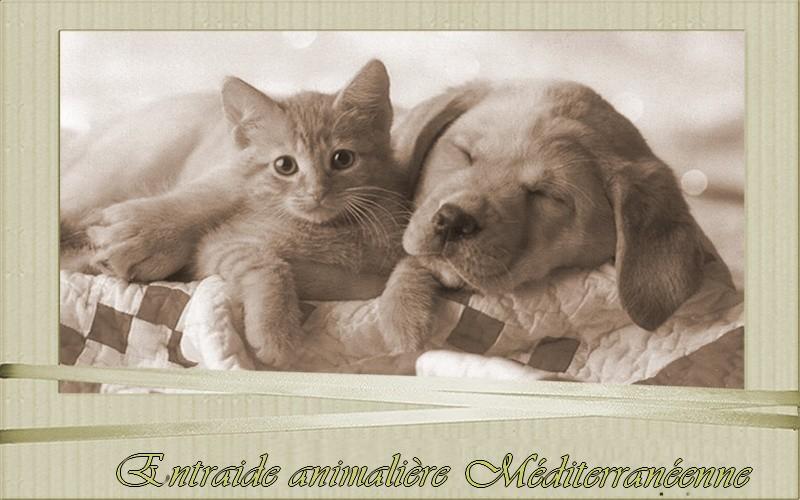 Entraide adoption animalière méditéranéenne