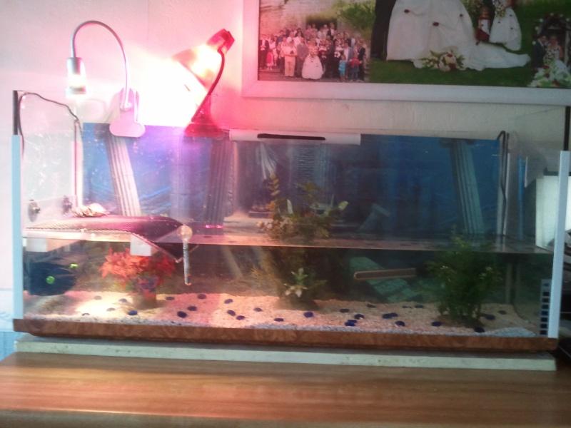 voici mon aqua 2011-012