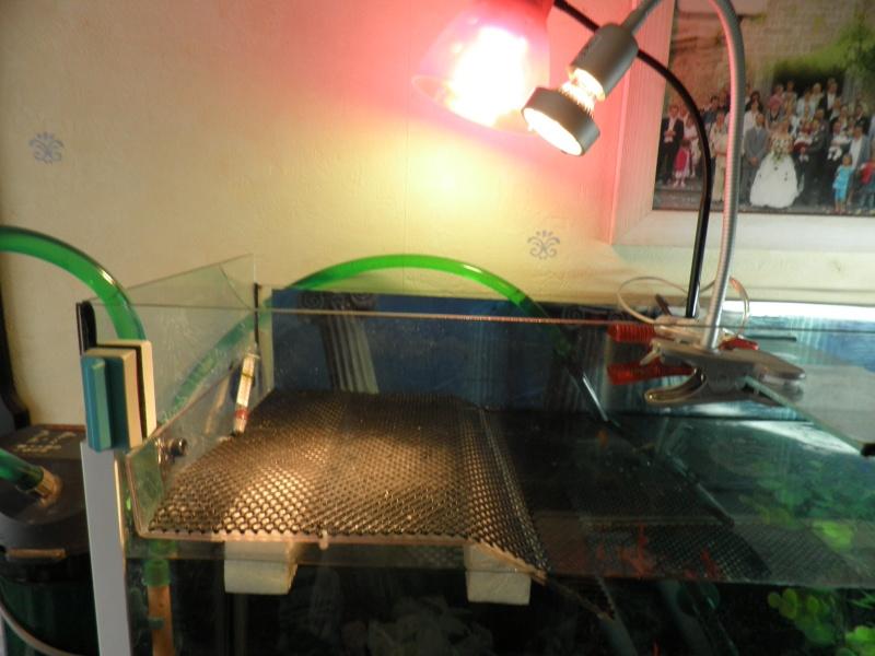 voici mon aqua P4010015