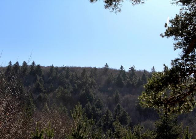 Forêts montagnardes du Massif Central Img_2510