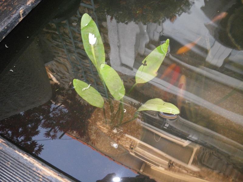 achat de plantes Imgp0014