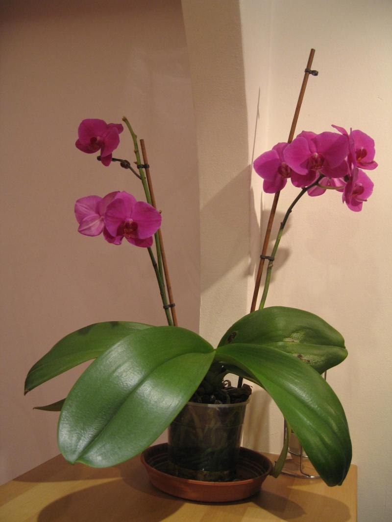 Orchidées... - Page 3 Bar_0114