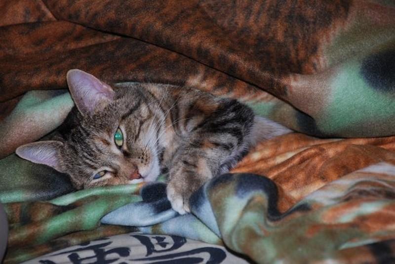 Concours du mois de Février 2010 : Thème : Animal de compagnie 17869_10