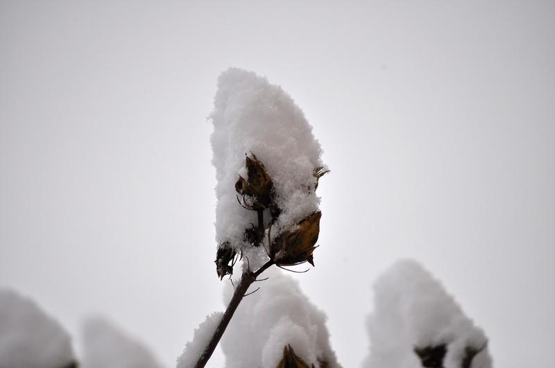 Paysages sous la neige Dsc_0237