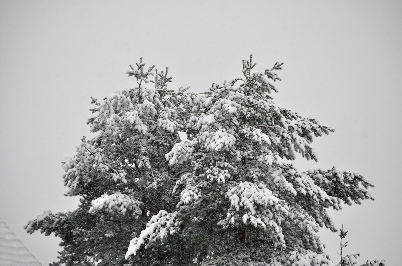 Paysages sous la neige Dsc_0240