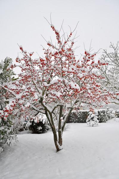 Paysages sous la neige Dsc_0241