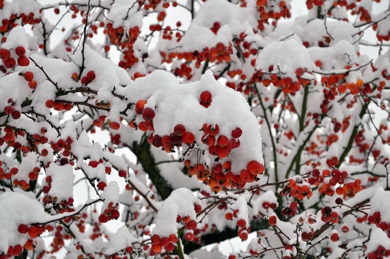 Paysages sous la neige Dsc_0242