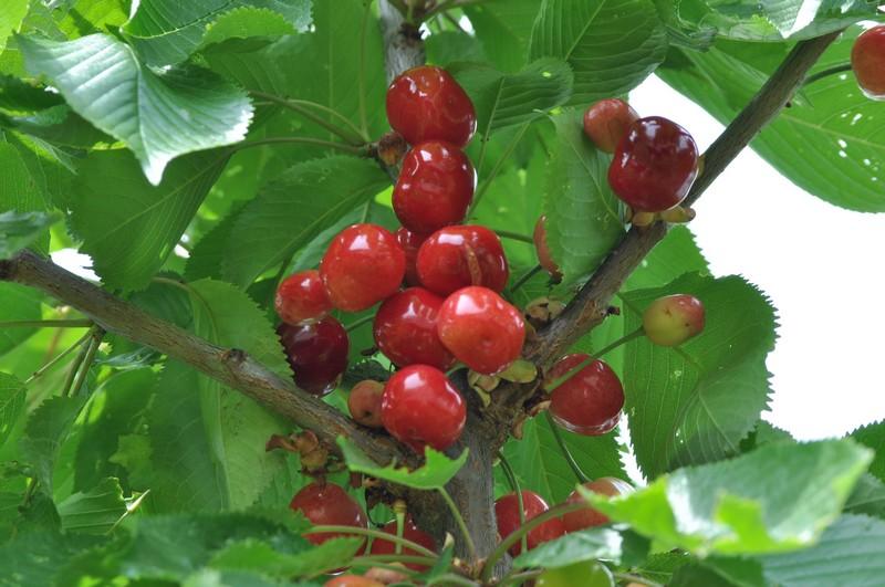 Fruits et légumes de saison Dsc_0320
