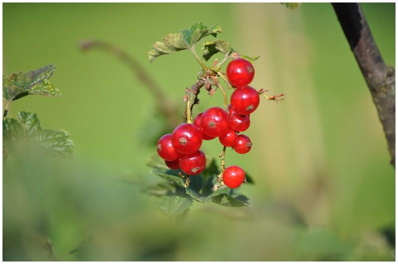 Fruits et légumes de saison Dsc_0417