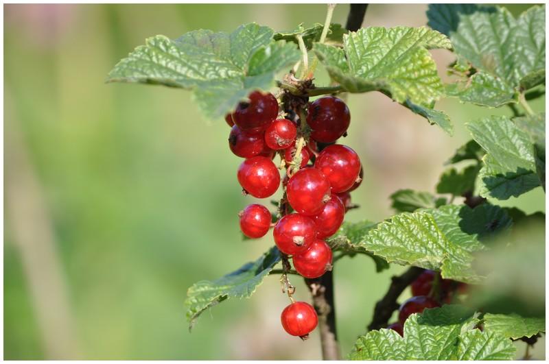 Fruits et légumes de saison Dsc_0418