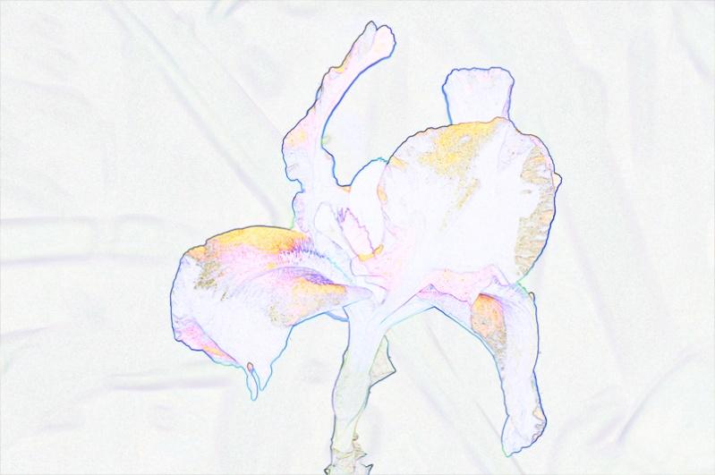 Conseil concernant l'utilisation des filtres Fleur_11