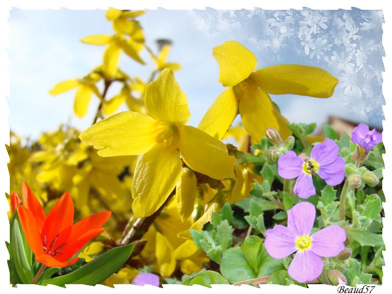 Concours du mois d'avril 2010. Thème : Les premières fleurs du printemps Printe10