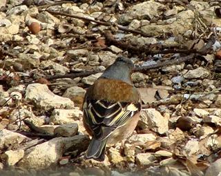 Les oiseaux du jardin (28 espèces d'oiseaux observées pour vous) Dsc02214