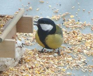 Les oiseaux du jardin (28 espèces d'oiseaux observées pour vous) Dsc02310