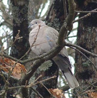 Les oiseaux du jardin (28 espèces d'oiseaux observées pour vous) Dsc02311