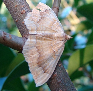 Papillons Dsc04212