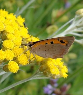 Papillons un peu plus insolites Dsc09310