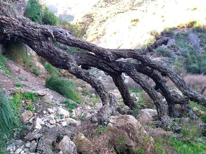 Randonnée pédestre Akkache, Cascade Mahrouja- cimetière des Martyrs- le canyon BOUHALOUMEN-Tizi warle samedi 22 février 2020 12136
