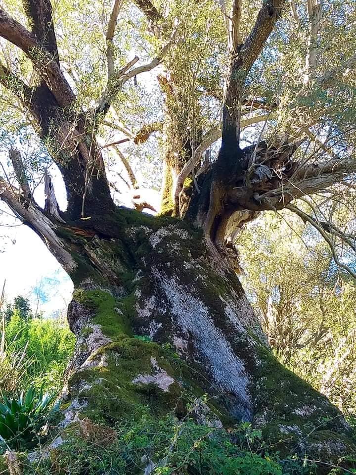 Randonnée pédestre Akkache, Cascade Mahrouja- cimetière des Martyrs- le canyon BOUHALOUMEN-Tizi warle samedi 22 février 2020 12138