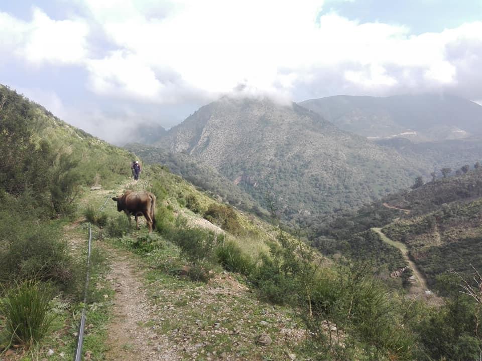 Randonnée pédestre sur les hauteurs de Ziama Mansouriah  le samedi 14 mars 2020 - Page 3 12369