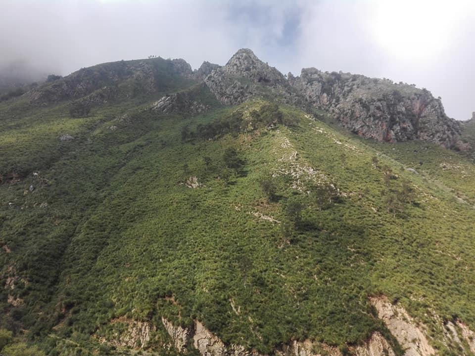 Randonnée pédestre sur les hauteurs de Ziama Mansouriah  le samedi 14 mars 2020 - Page 3 12373