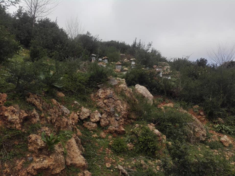 Randonnée pédestre sur les hauteurs de Ziama Mansouriah  le samedi 14 mars 2020 - Page 3 12379