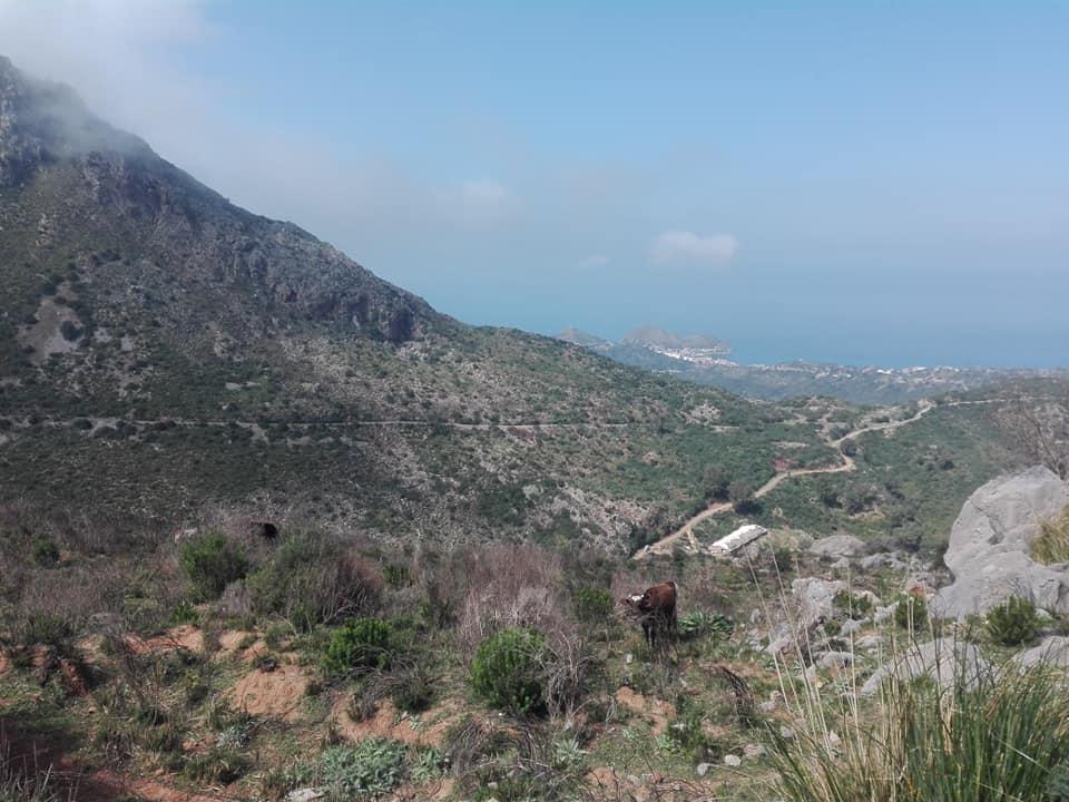 Randonnée pédestre sur les hauteurs de Ziama Mansouriah  le samedi 14 mars 2020 - Page 3 12380