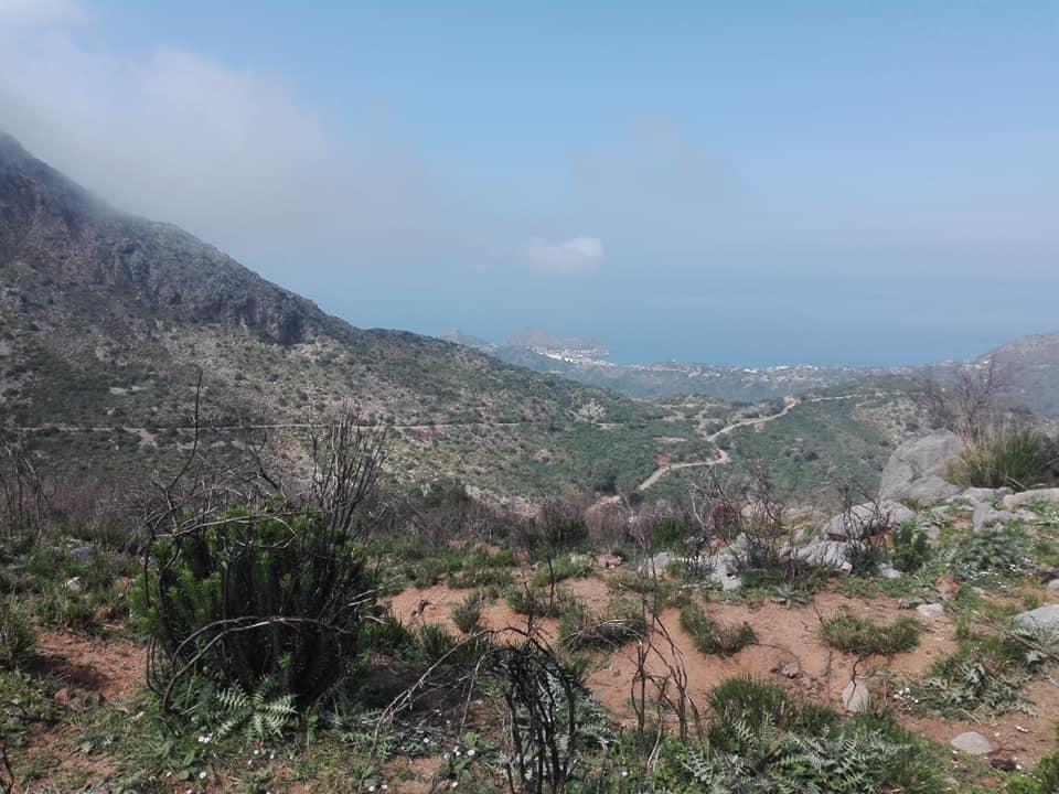 Randonnée pédestre sur les hauteurs de Ziama Mansouriah  le samedi 14 mars 2020 - Page 3 12384
