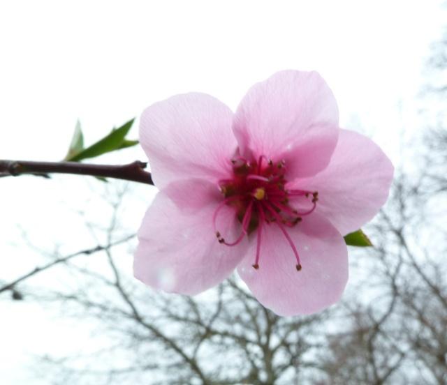 Les fleurs... Photos16
