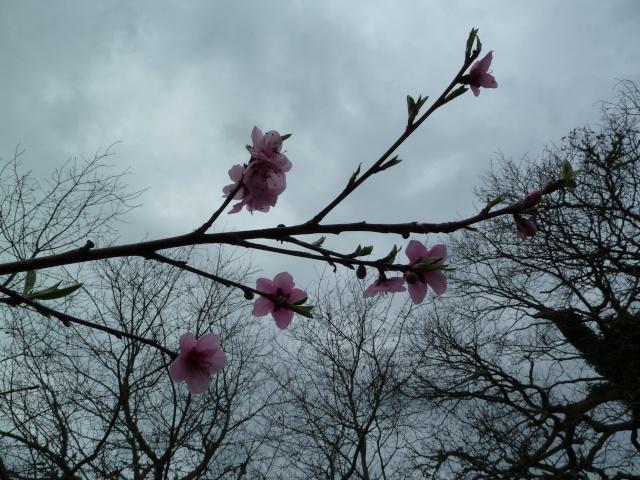 Les fleurs... Photos20