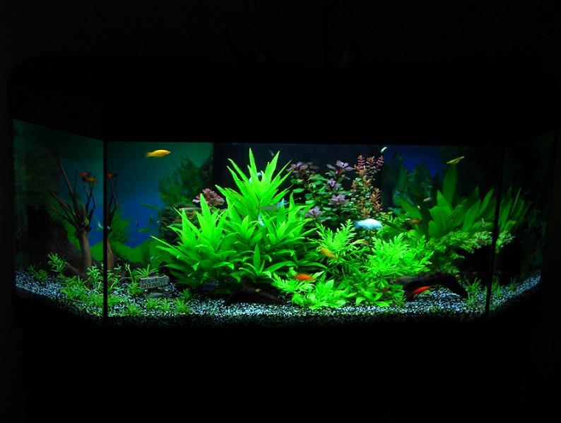 MES AQUARIUMS 240 L Communautaire et 30 L Aquascape + photos - Page 2 01310