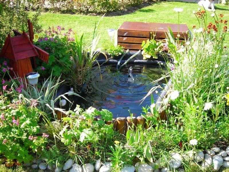 MON PETIT BASSIN de jardin 500 L  + photos M_200910