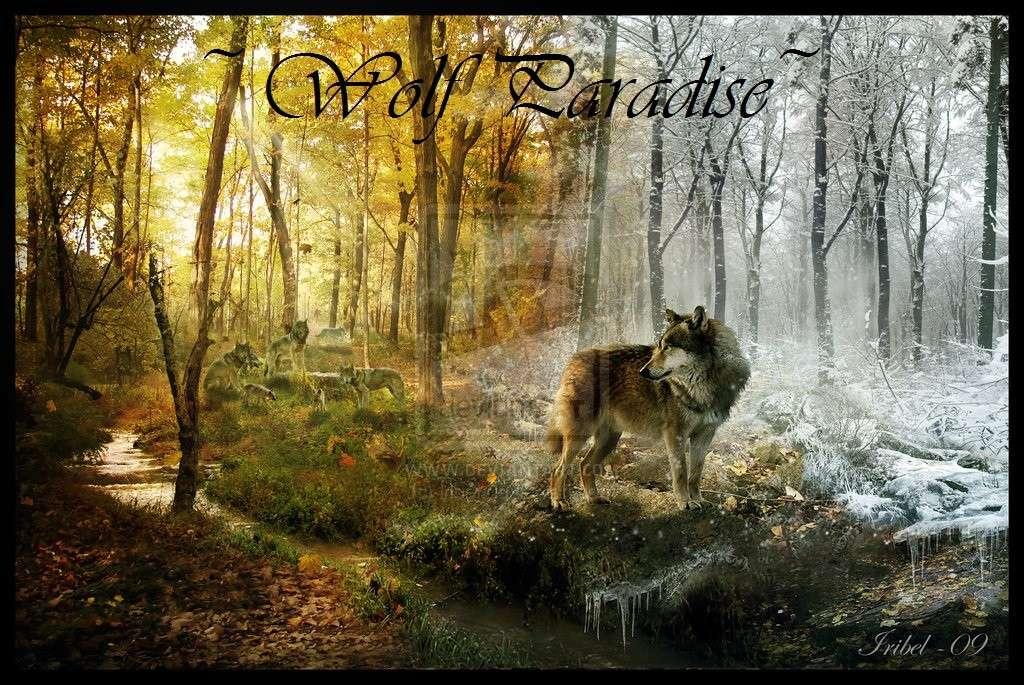 wolf paradise