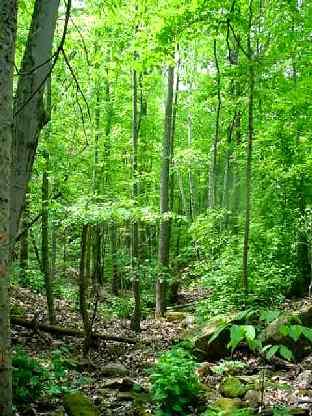 GreenClan Territory