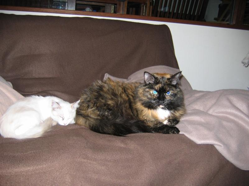 LOTUS (Stella) et LILOU (Joy) Img_2010