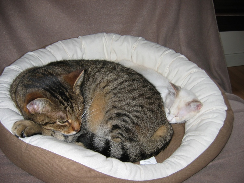 LOTUS (Stella) et LILOU (Joy) Img_2011