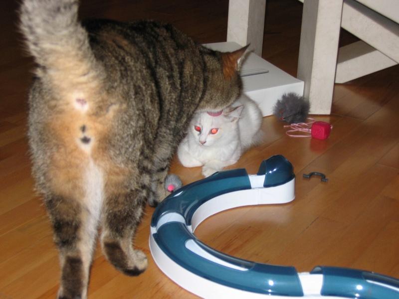 LOTUS (Stella) et LILOU (Joy) Img_2012
