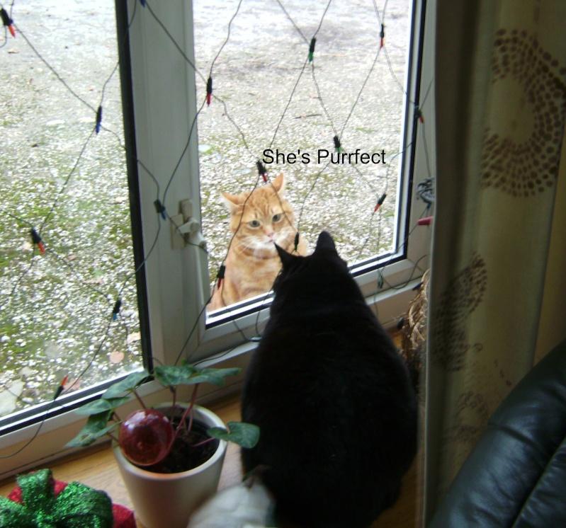 Poppys New Admirer 01511