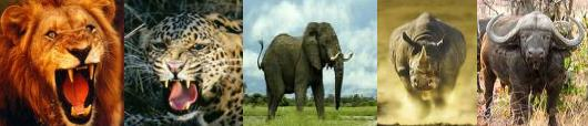 Africas Big Five
