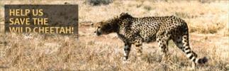 Cheetah Conservation Fund Cheeta12