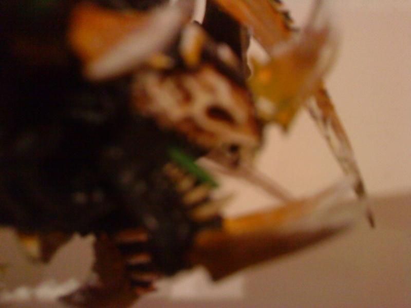 [Concour] Escouade/Tank/Créature monstrueuse Dsc01413