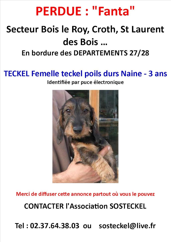 DEP 27/28 - Perdu femelle teckel poils durs naine - foret St  laurent des bois, croth, bois le roy Annonc10