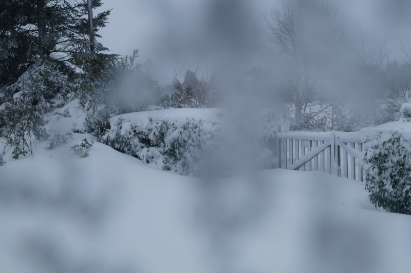 Mes Ellowynes dans la neige par Mellody - Page 2 Dsc01018