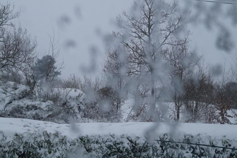 Mes Ellowynes dans la neige par Mellody - Page 2 Dsc01020