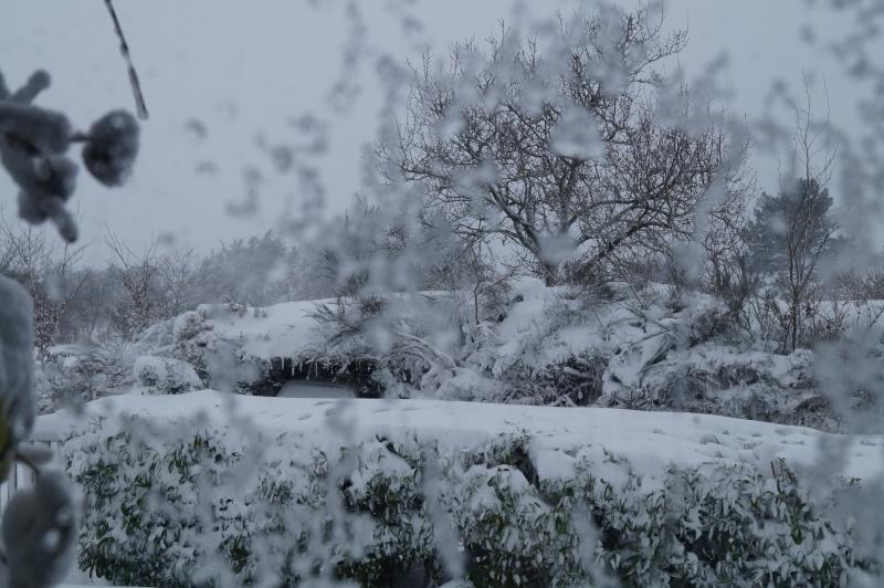 Mes Ellowynes dans la neige par Mellody - Page 2 Dsc01021